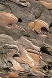 Fondo detallado de la corteza de árbol de pino del primer Imagen de archivo