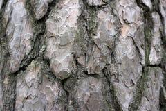 Textura dimensional da proteção da casca de árvore de externo imagens de stock royalty free