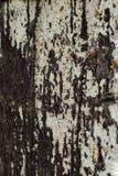 A textura do óleo Fotos de Stock