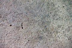 textura do assoalho do cimento Fotografia de Stock