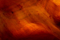 Textura do búzio iluminado Imagem de Stock Royalty Free