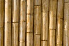 Textura do bambu da alta qualidade Foto de Stock