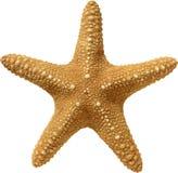 A textura do bege da estrela do mar em um fundo branco fotos de stock royalty free