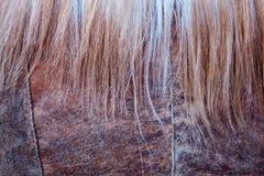Textura do cabelo das mulheres e dos revestimentos de pele de carneiro fotografia de stock