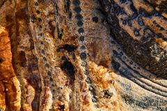 Textura do cacto de San Felipe, Mexica imagem de stock