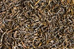 Textura do chá verde Fotos de Stock