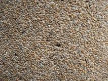 Textura do cimento Fotos de Stock