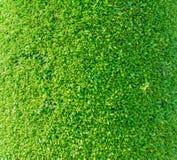 Textura do close-up Imagem de Stock