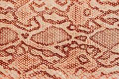 Textura do close-up do couro genuíno, gravada sob a pele um réptil, fundo Fotografia de Stock Royalty Free