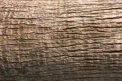 Textura do corpo da palma de fã de Califórnia para o fundo natural fotografia de stock