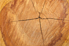 Textura do corte da árvore Imagens de Stock Royalty Free