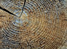 Textura do corte da madeira fotografia de stock