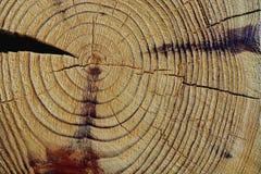 Textura do corte da madeira imagens de stock