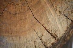 Textura do corte da madeira Imagem de Stock Royalty Free