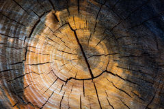 textura do coto de árvore Foto de Stock Royalty Free