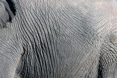 Textura do couro cru do elefante fotografia de stock royalty free