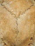 Textura do crânio dos cervos Foto de Stock