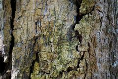 Textura do detalhe do tronco de árvore como o fundo natural Papel de parede da textura da árvore de casca foto de stock