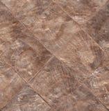 Textura do escudo do mar de Capiz Imagem de Stock