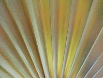 Textura do fã do ouro Fotos de Stock Royalty Free