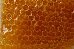 Textura do favo de mel Foto de Stock Royalty Free