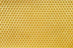 Textura do favo de mel Imagens de Stock