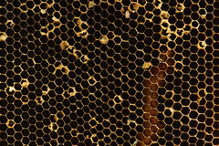 Textura do favo de mel Fotografia de Stock Royalty Free