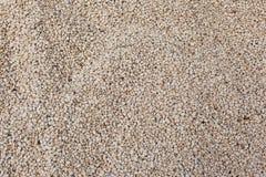 Textura do feijão da soja Imagem de Stock Royalty Free