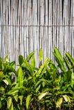 Textura do fundo bonita com bambu e folha Fotos de Stock Royalty Free