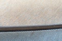 Textura do fundo do close-up da pena do pombo Imagens de Stock Royalty Free