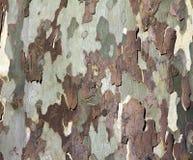 Textura do fundo da casca de árvore Fotos de Stock Royalty Free
