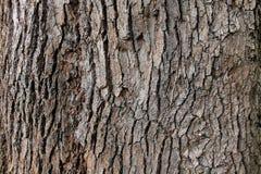 Textura do fundo da casca de árvore Imagens de Stock