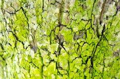 Textura do fundo do fundo da casca de árvore fotos de stock