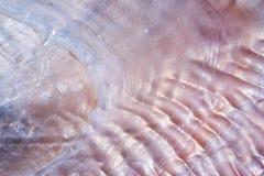 textura do fundo da concha do mar Foto de Stock Royalty Free