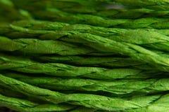 Textura do fundo da corda verde conceito e projeto imagem de stock