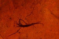Textura do fundo da folha do outono Imagem de Stock