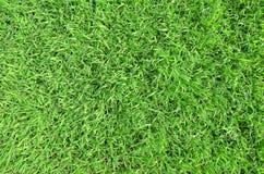 Textura do fundo da grama verde Imagens de Stock Royalty Free