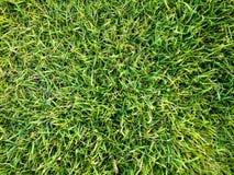 Textura do fundo da grama verde Campo do futebol ou do golfe fotos de stock