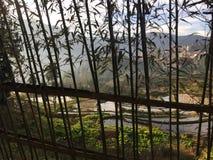 Textura do fundo da paisagem através da planta de bambu foto de stock
