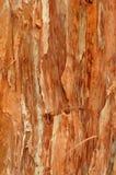 Textura do fundo de uma árvore de Paperbark Imagem de Stock Royalty Free