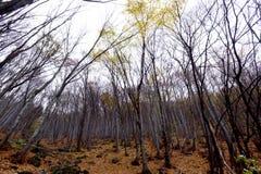 A textura do fundo do amarelo deixa o outono Fotos de Stock