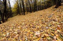 A textura do fundo do amarelo deixa o outono Fotos de Stock Royalty Free