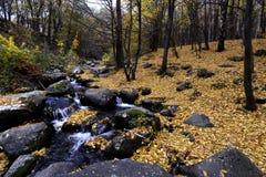 A textura do fundo do amarelo deixa o outono Imagens de Stock Royalty Free