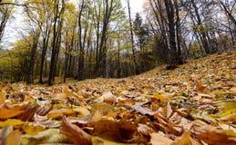 A textura do fundo do amarelo deixa o outono Foto de Stock Royalty Free