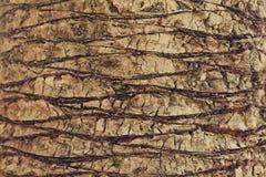 Textura do fundo do close up da palmeira exótica Imagens de Stock
