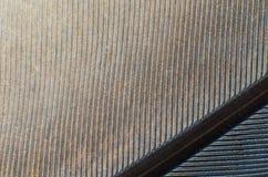 Textura do fundo do close-up da pena do pombo foto de stock royalty free