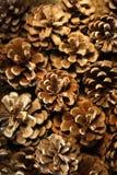 Textura do fundo dos cones de abeto. Foto de Stock