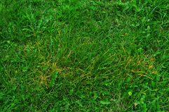 textura do fundo natural de grama verde Imagens de Stock