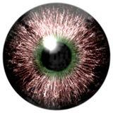 Textura do globo ocular de Brown com verde ilustração stock
