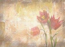 Textura do Grunge com fundo floral do vintage Tulipas holandesas Fotos de Stock Royalty Free